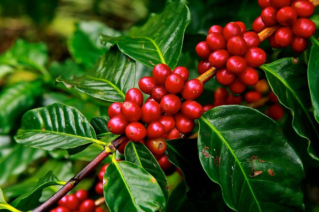 Descubre 5 propiedades del café que seguramente desconocías